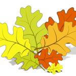 Рисуем векторное изображение дубового листа.