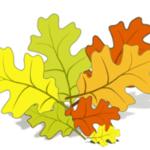 Как нарисовать дубовый лист