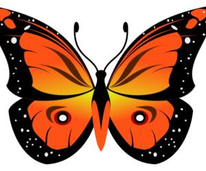 Бабочка в inkscape