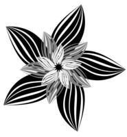 цветок из линий